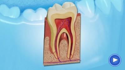 WebPakOnline Gum Disease