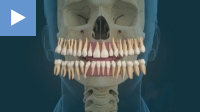 Teeth Layout